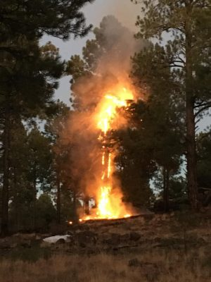 photo courtesy of Flagstaff Fire