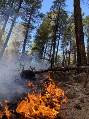 photo courtesy of the U.S. Forest Service.