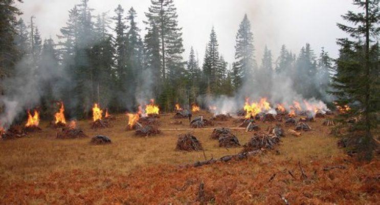 pile burns